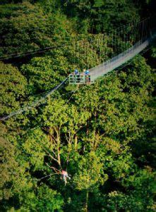 tarzan swing monteverde costa rica posts popular and cas on pinterest