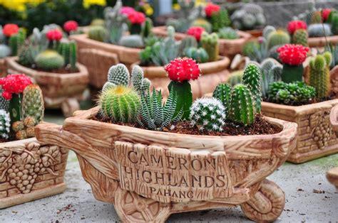inspirasi tanaman hias mini  meja kerja usir