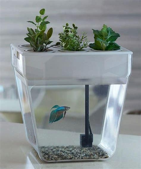 aqua farm self cleaning fish tank brilliant design idea