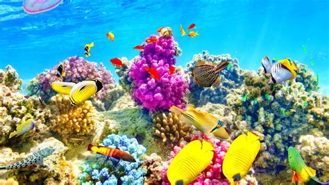 wallpaper colorful fish and interactive water tropical fish backgrounds 183