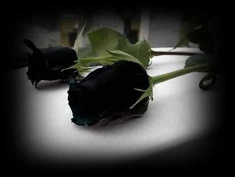 Imagenes Negras Groseras | imagenes de rosas negras im 225 genes desamor 2018