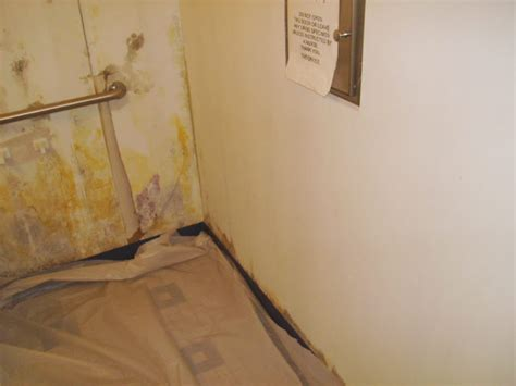 is bathroom mold toxic toxic black mold removal in orlando before and after