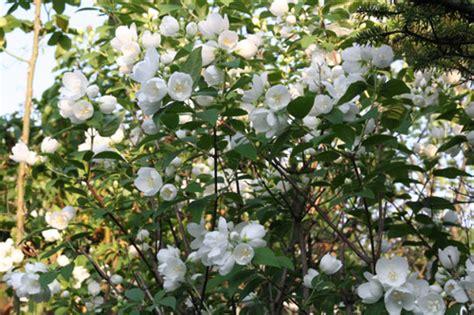 fior d angelo fior d angelo adesso 232 il suo momento fiori e foglie