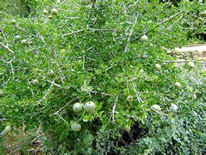 Gamis Gardenia z wizyt艱 w ogrodzie botanicznym w nelspruit