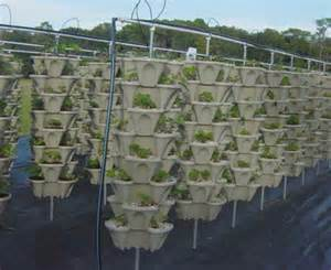 Aquaponic Vertical Garden Aquaponic Vertical Garden A Scam Proof Guide To