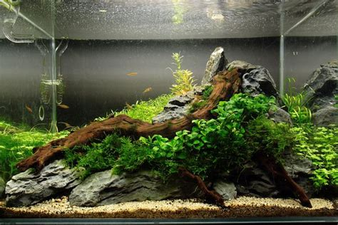 1000 images about aquascaping on aquarium