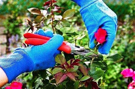 Pupuk Untuk Bunga Lada tips merawat bibit tanaman agar selalu sehat dan cepat