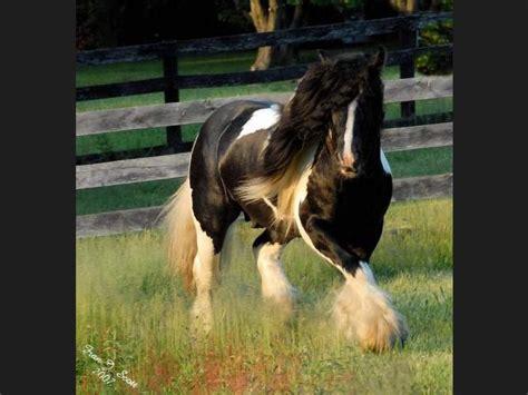 imagenes de animales hermosos del mundo lista los animales mas hermosos del mundo parte1