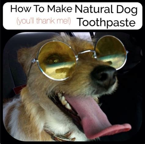 how much to clean dogs teeth at home teeth cleaning recipe homestead survival
