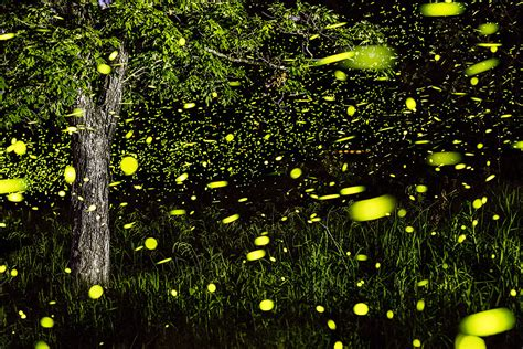 Led Halloween Lights Magical Long Exposure Firefly Pictures By Vincent Brady