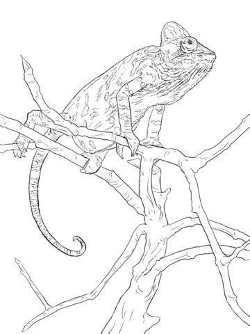 water monitor coloring page water monitor lizard coloring pages coloring pages