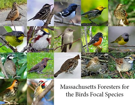 foresters for the birds distraction displays