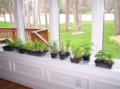 Window Vegetable Garden Bought Some Herbs Growing In My Gardengrowing In My