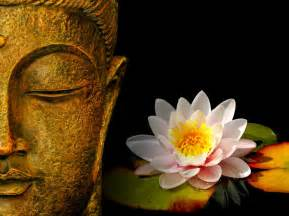 Buddha With Lotus Flower Lord Buddha Hd Images And Statue Wallpaper Pixhome