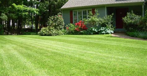 lawn mowing stockton ca chop chop landscaping