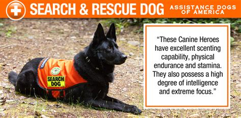 search dogs search and rescue dogs ada registry register your assistance here