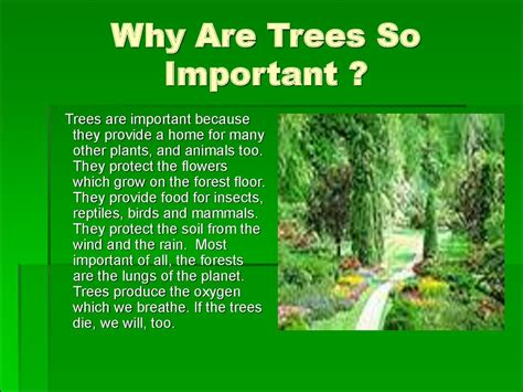 why the tree ecological problems