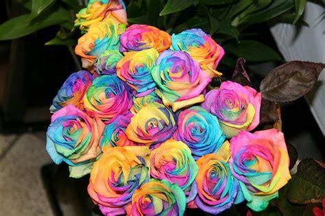 Lu Tidur Pelangi Rainbow Murah toko bunga serpong florist serpong florist tangerang