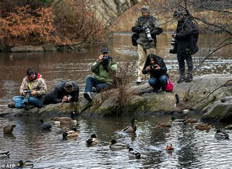 central park duck boats hot duck is back in central park after weekend escape to