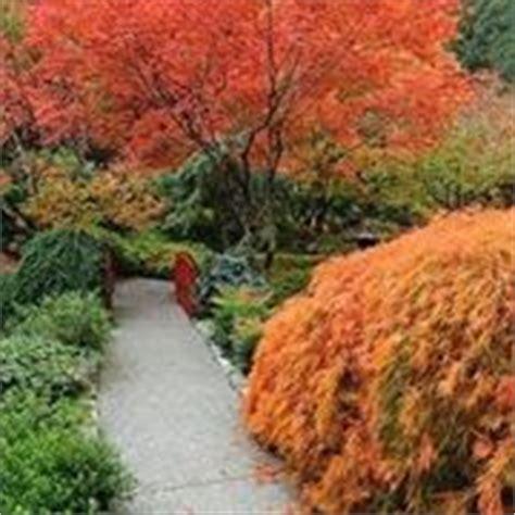 Piante A Foglia Larga Da Esterno alberi a foglie caduche piante da giardino alberi a