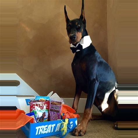treats for puppies 3 months 7 subscription boxes the last minute gift