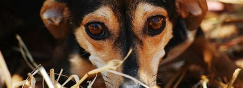 how to stop separation anxiety in dogs puppy guides and tips small fluffy breeds