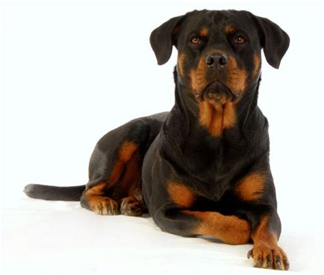 can you breed and dogs can you name these breeds quizly page 2