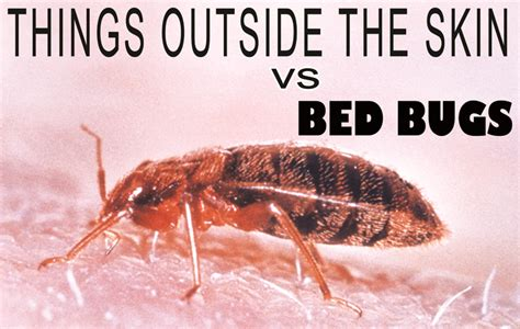 can bed bugs come from outside can bed bugs live outside 28 images how long can bed