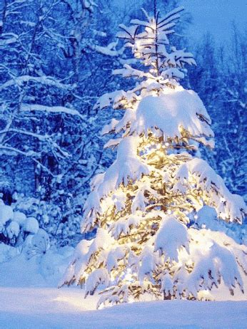 animated christmas trees with snow wallpapers 15 cool gifs to get you in the spirit the xerxes