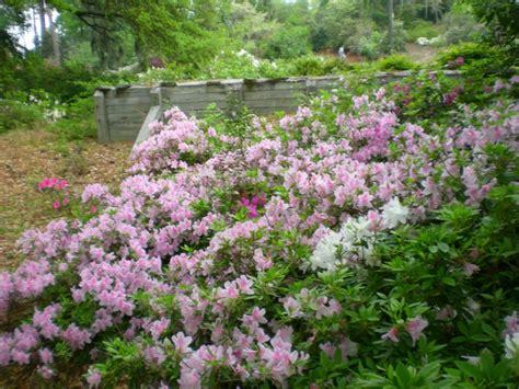 Edisto Memorial Gardens by Edisto Memorial Gardens Orangeburg Sc I Lived In