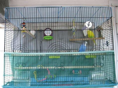come costruire una gabbia per pappagalli gabbie per cocorite uccelli esotici voliere per le