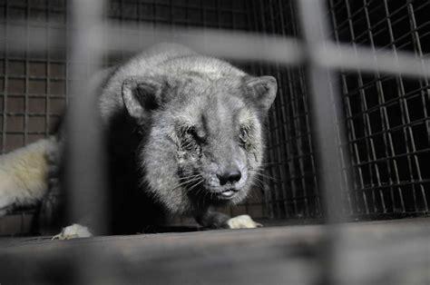 fur farming a book of information about fur bearing animals enclosures habits care etc classic reprint books fur farming animal welfare problems