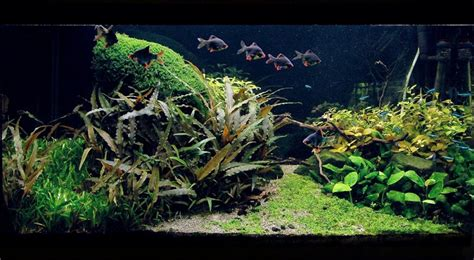 aquascape design software aquascape design software amano aquascape aquarium