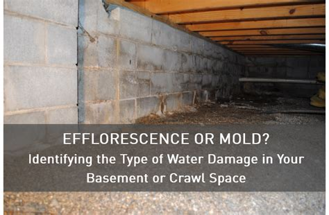 types of basement mold stego vapor barrier solutions for crawl space