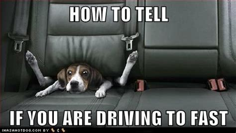 Dog Driving Meme - funny dog pictures how to tell if you are driving to fast