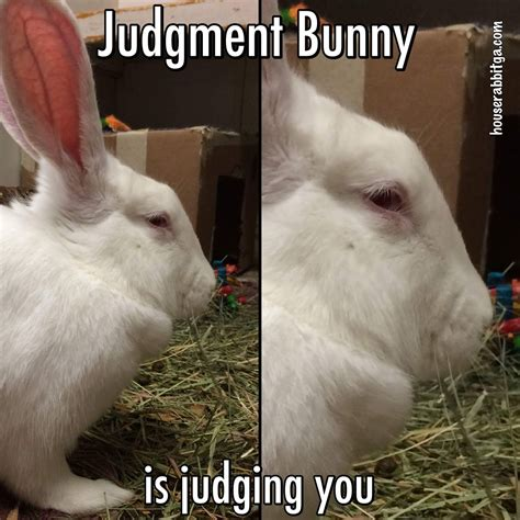 Bunny Meme - rabbit ramblings february 2017