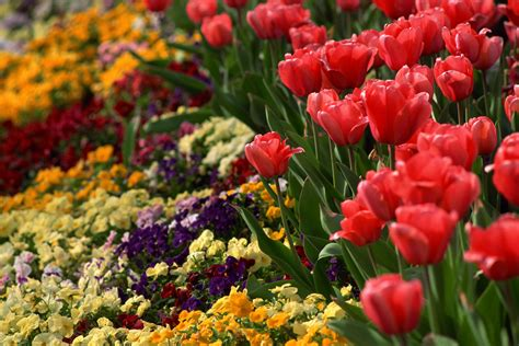 popular spring flowers mercedes benz of owings mills the best springtime