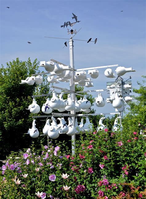 Purple Martin gourd rack house   Birds   Purple martin