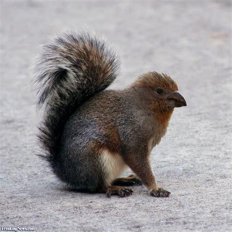 image gallery squirrel bird