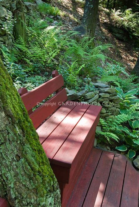 bench slope shaded wooden garden bench with ferns tree trunk on a