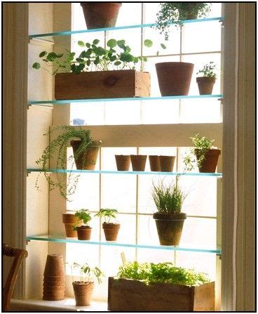 glass window shelves  plants ideas window herb garden
