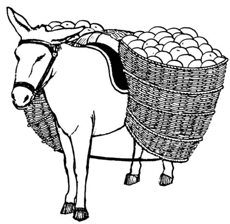 Free Donkey Clipart  Picture 5 Of 12 sketch template