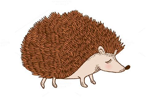 echidna clipart porcupine clipart hedgehog pencil and in color