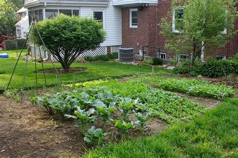 backyard vegetable garden layout triyae backyard vegetable garden layout various
