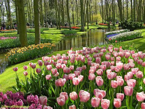 Wallpaper Bunga Di Taman | foto taman laut bunaken betapa indahnya tempat ini hd