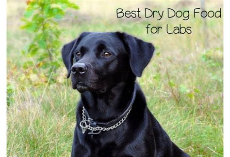 best puppy food for labs what is the best food for labs