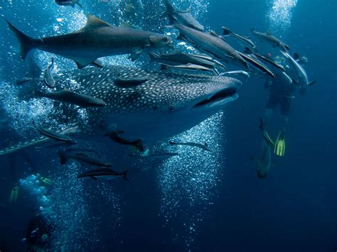 dive places top diving of south america amazing places