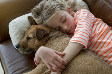 why do dogs like to cuddle comfort tailwaggers country inn