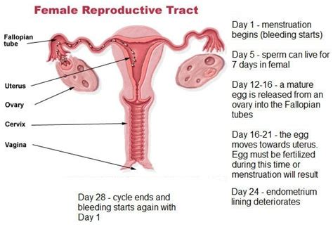 how long does bleeding after c section last does implantation bleeding happen at the same time around