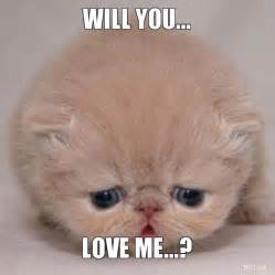 Love Me Meme - cat love memes memes